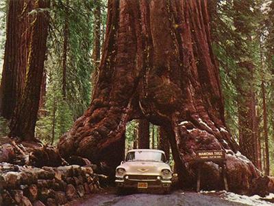 Khám phá California – tiểu bang xinh đẹp của nước Mỹ