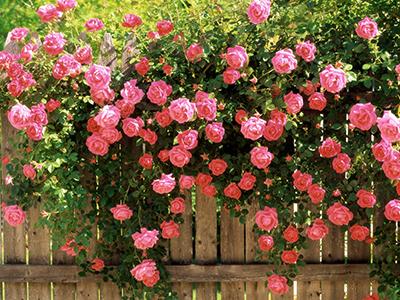 6 lễ hội hoa tuyệt sắc ở Mỹ