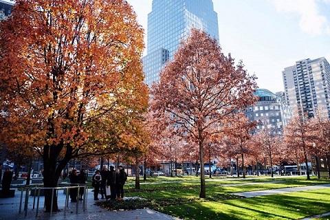 """""""Cây sinh tồn"""" – New York – Không chỉ đẹp mà còn mang ý nghĩa lịch sử sâu sắc"""